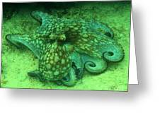 Octopus In The Sand Greeting Card