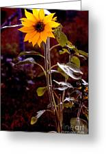 Ode To Sunflowers Greeting Card