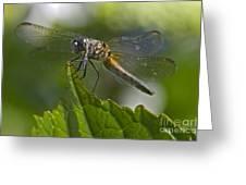 Odonata Greeting Card
