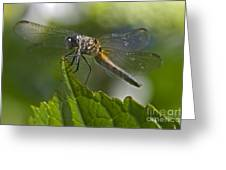 Odonata Greeting Card