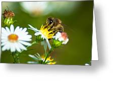 Of Bee And Flower Greeting Card