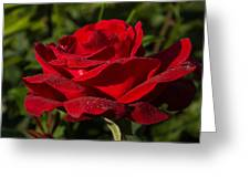 Of Red Roses And Diamonds  Greeting Card