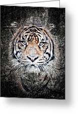 Of Tigers And Stone Greeting Card
