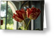 Of Tulips And Windows Greeting Card