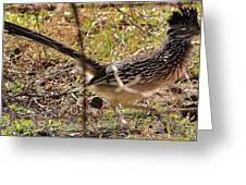 Off The Roadrunner Greeting Card