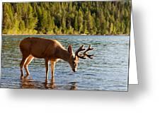 Oh Deer Is That Me Greeting Card