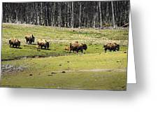 Oh Give Me A Home Where The Buffalo Roam Greeting Card