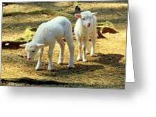 Oh Little Lamb Greeting Card