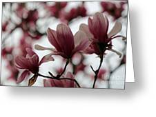 Oh Magnolia Greeting Card