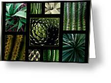 Oh My Cacti Greeting Card
