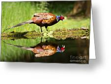 Oh My What A Handsome Pheasant Greeting Card