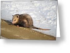Oh Possum Greeting Card