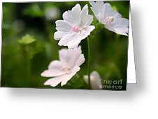 Oh So Pretty Musk Mallow Greeting Card