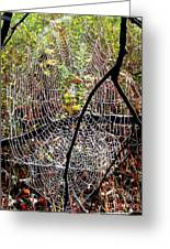 Oh What A Web We Weave Greeting Card