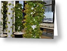 O'hare Airport Hydroponic Garden Greeting Card