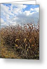 Ohio Corn Greeting Card by Andrea Dale