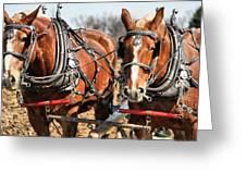 Ohio Draft Horses Greeting Card