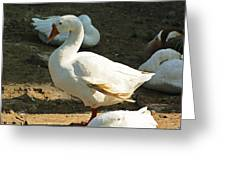 Oil Painting - A Duck Making A Pose Greeting Card