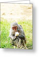 Oil Painting - A Monkey Eating An Ice Cream Greeting Card