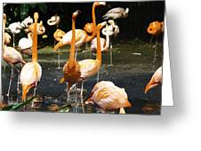 Oil Painting - A Number Of Flamingos With Their Heads Held High Inside The Jurong Bird Park Greeting Card