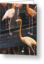 Oil Painting - Focus On A Single Flamingo Inside The Jurong Bird Park Greeting Card