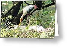 Oil Painting - Mama Stork Feeding Young Greeting Card
