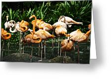 Oil Painting - Number Of Flamingos Inside The Jurong Bird Park Greeting Card