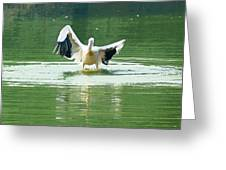 Oil Painting - Pelican Flapping Its Wings Greeting Card
