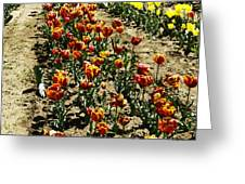 Oil Painting - Red And Yellow Tulips Inside The Tulip Garden In Srinagar Greeting Card
