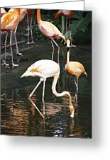 Oil Painting - The Head Of A Flamingo Under Water In The Jurong Bird Park In Singapore Greeting Card