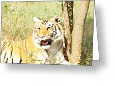 Oil Painting - An Alert Tiger Greeting Card