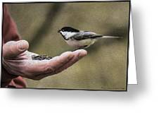 Oil Painting Black-capped Chickadee  Greeting Card