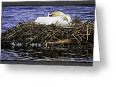Oil Painting Nesting Swan Michigan Greeting Card