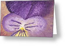 Oil Painting Of Pansy - Viola Tricolor Greeting Card