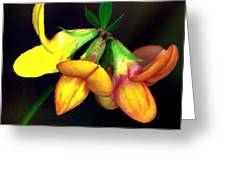 Yellow And Orange Trefoil  Greeting Card