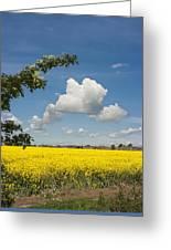 Oilseed Rape Field Against Blue Sky Greeting Card