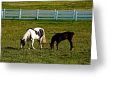 Ok Horses Greeting Card
