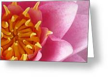 Okeefe Lily Blossom Greeting Card