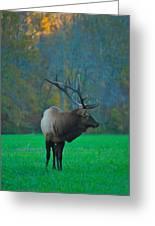 Okonoluftee Elk Greeting Card