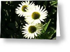 Olbrich Garden View 3 Greeting Card