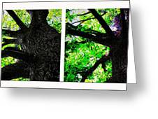 Old Barks Diptych - Deciduous Trees Greeting Card