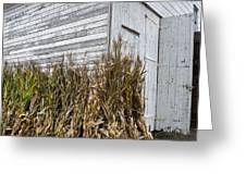 Old Barn And Cornstalks Greeting Card