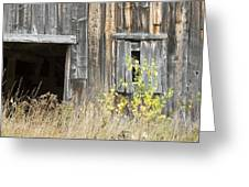 Old Barn In Fall Maine Greeting Card