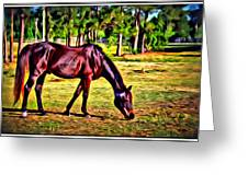 Old Bay Horse Greeting Card