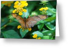 Old Butterfly Greeting Card