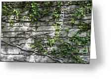 Old Coquina Wall Greeting Card