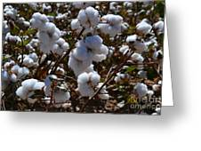 Old Cotton Fields Back Home Greeting Card by Beverly Guilliams