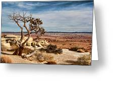 Old Desert Cypress Struggles To Survive Greeting Card