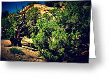 Old Desert Tree Number Two Greeting Card