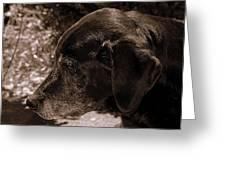 Old Dog Greeting Card